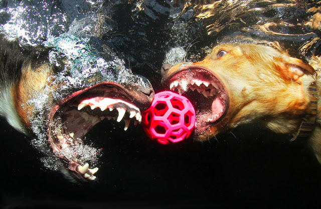 "Seth Casteel, ""Underwater Dogs"" at Dillon Gallery"